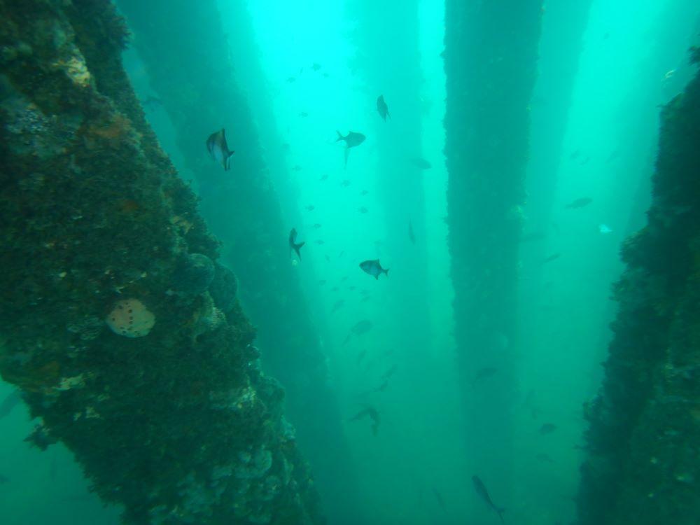 Rapid Bay South Australia