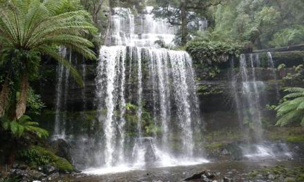 Mount Field Waterfalls & Walks