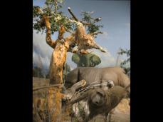 Cabela's African Savanah Diorama