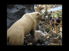 Cabela's Bears and Humans Diorama