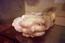 Vintage mold of Victorian era ectoplasm, Stansted, England, 2012
