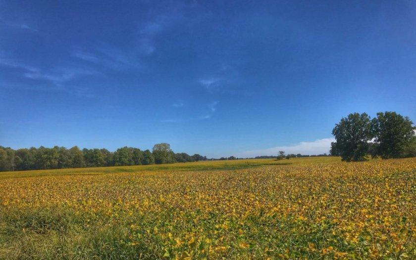 Soy Bean field by Curious Craig