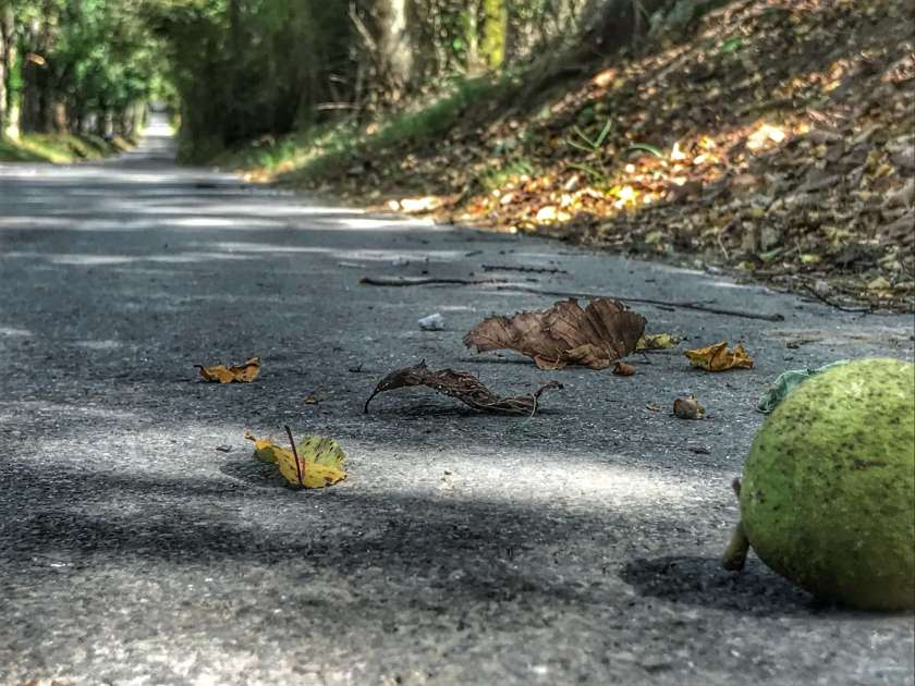 Walnut in Road by Curious Craig