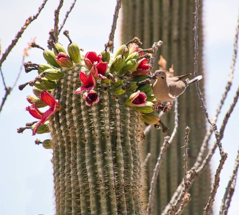 Curious Craig - Bird-on-Cactus.jpeg