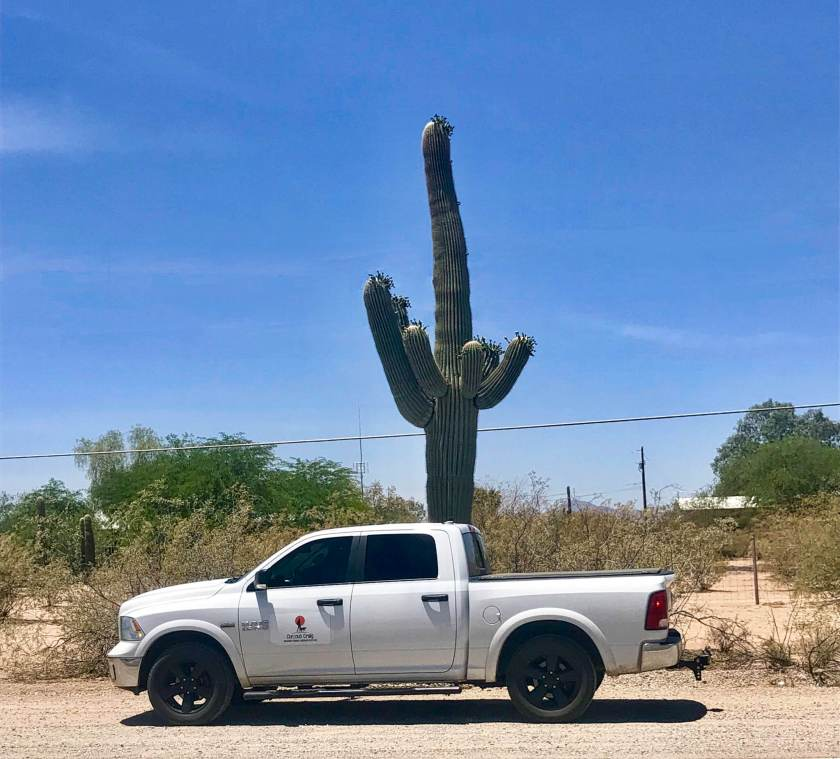 Huge Saguaro Cactus