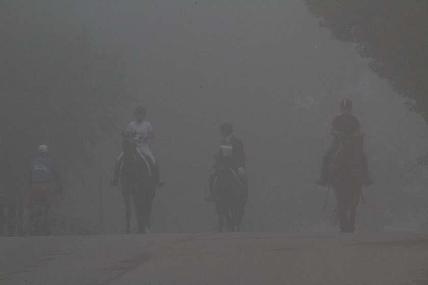 Curious Craig - Horses-in-Fog.jpg