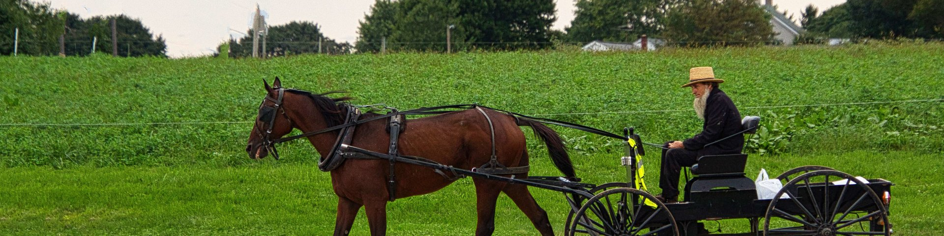 Curious Craig - Amish-Driver.jpeg