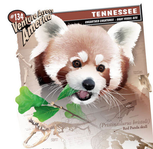 Tennessee - Red-Panda-Supergraphic.jpeg