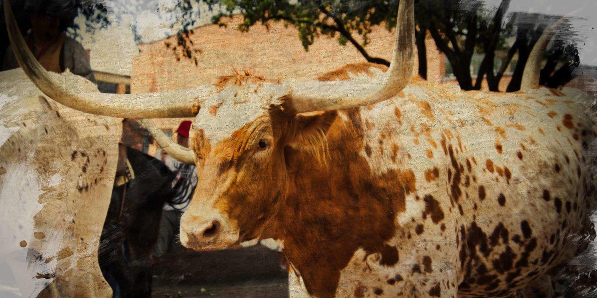 Curious Craig - Steer-Vintage-Painted.jpg