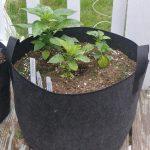 Soil grown plants in fabric pots