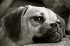 Daisy riding shotgun - what a good lil pup!