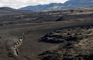 Horses being herded through the lava fields near Landmannalaugar in southern Iceland on September 21, 2011. Photo by: Lindsay Blatt / Herd In Iceland About the Project: In September and October of 2010, Lindsay Blatt and Paul Taggart were worked in Iceland on their short film and photographic project documenting the historic herding of the prized Iceland horses.  Each year traditional herdsman take to the  back country to round up thousands of the country's hardy horses, which have spent the summer grazing in the highlands.  Throughout the three weeks of production Lindsay and Paul shot from land, air, foot, and hoof across the vast Icelandic landscape, following and living with the herdsmen.  The team has brought together a collection of media for print publications, as well as a short documentary film.  In September of 2011, the team returned to conduct interviews for the film, and to produce a new selection of large format portraits to accompany the landscapes for future exhibitions.
