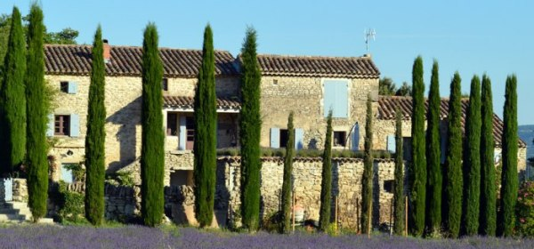 Cypress trees in Provence