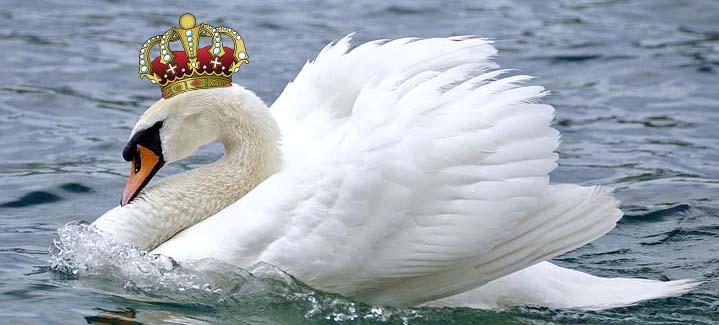 swan w crown
