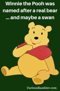 Winnie the Pooh was named after a real bear... and maybe a swan