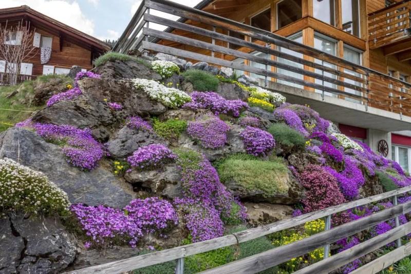 Rock garden in Murren