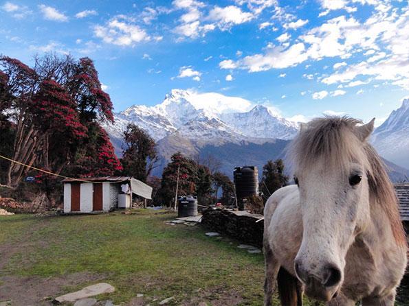 The beautiful view of the Annapurna, Nepal
