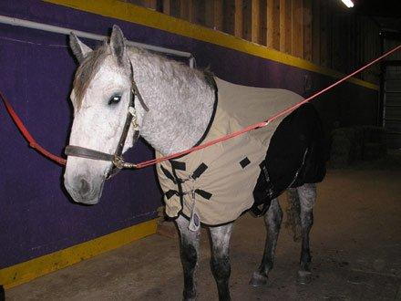 Horse Rain sheets