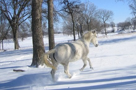 horse riding in snow can be a fun winter horse activity