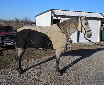 Tuff Rider Stretch Manager Rain Sheet