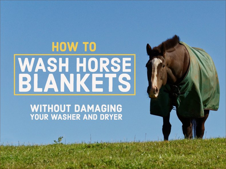 How to wash a horse blanket at home without damaging your washer and dryer