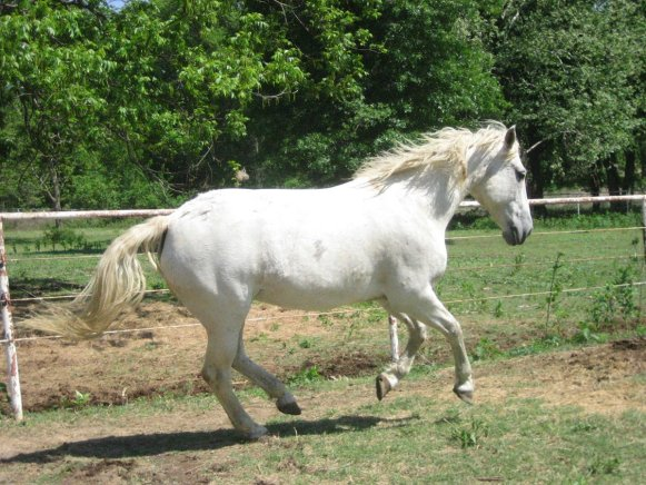Reduce grooming time by controlling your white horse's environment