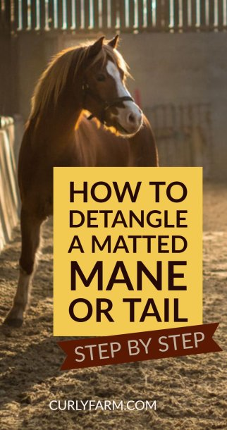 How to detangle a matted horse mane or tail