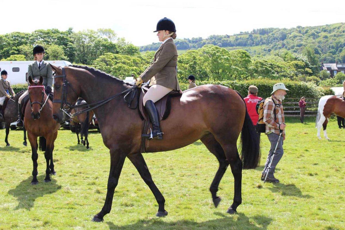 Riding The Canter Tips To Cue Relax Correct And Enjoy