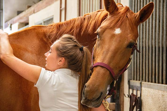 horses provide companionship for girls and teens