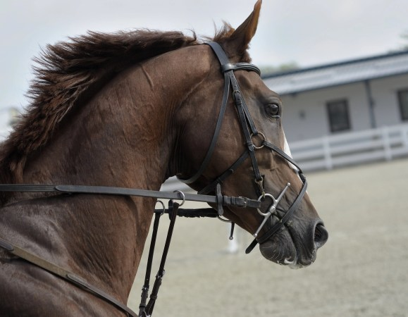 A full cheek snaffle in use without keepers
