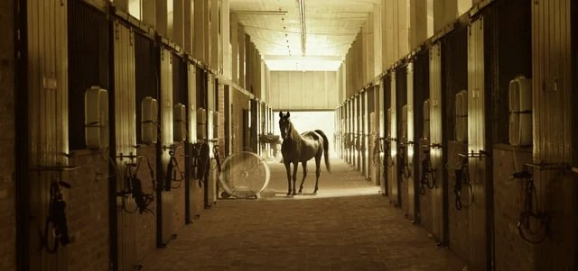 Horse standing outside stalls in a barn