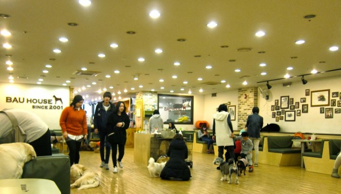 Bau House Dog Cafe in Seoul