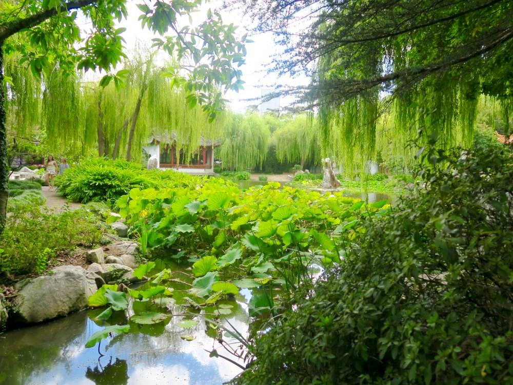 Chinese Gardens in Sydney are green |curlytraveller.com
