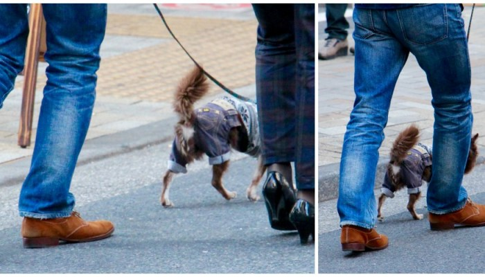 Stylish pets in Tokyo