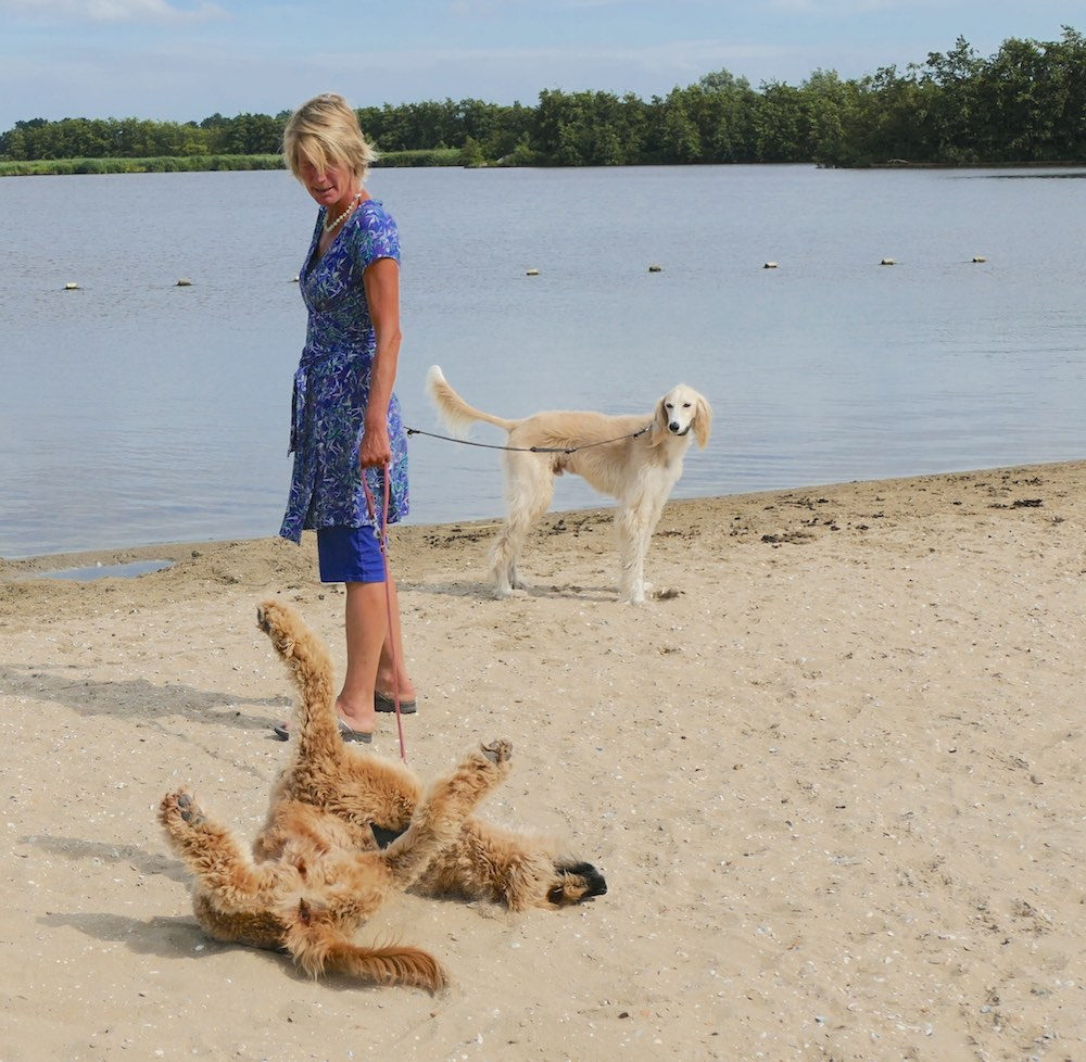 Dog rolling in the beach sand |curlytraveller.com