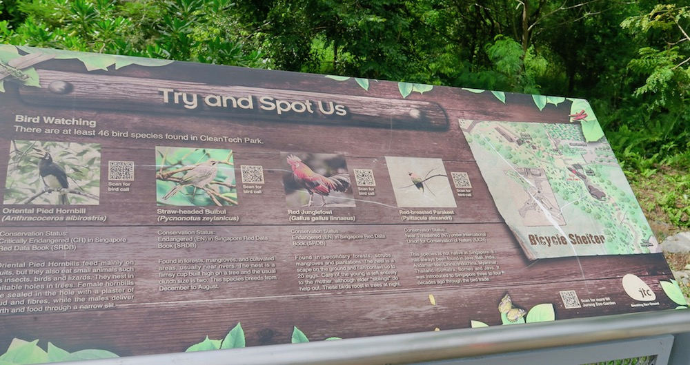 Flora and fauna in Singapore's green zones |curlytraveller.com
