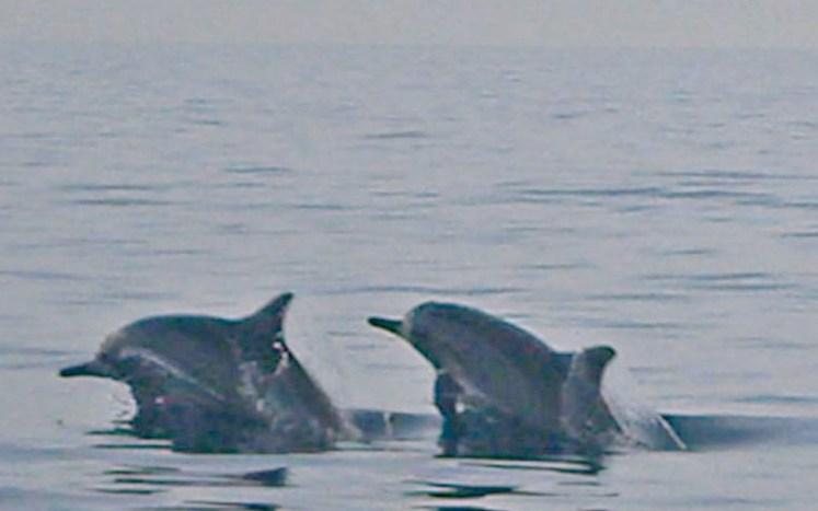 delfiny 4