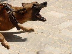 Dog Bite Lawyer Curran Law