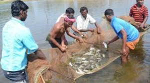 India becomes second largest fish producing country in the world