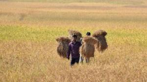 India signs $200 mn deal with World Bank for rural transformation in Assam