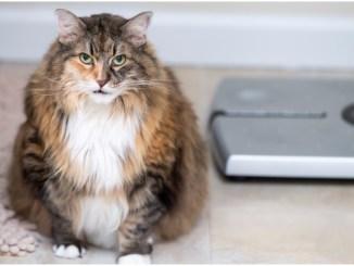 Pet obesity Hill's Pet Slimmer