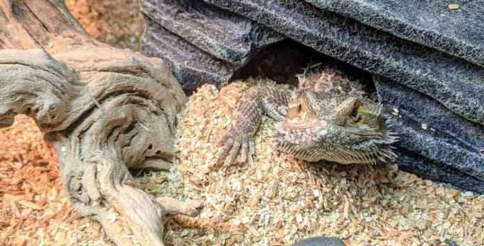 DIGGABLE CLAY SUBSTRATES for reptile