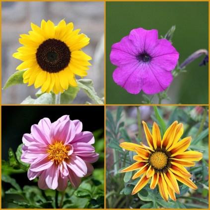 flower-col-1
