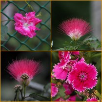 flower-col-6