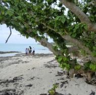 Taketomi, 竹富島, Kaiji Beach, Sternensand, star sand, 星の砂, Yaeyama-Inseln, 八重山諸島, Ryūkyū, 琉球, Okinawa, 沖縄県, Japan