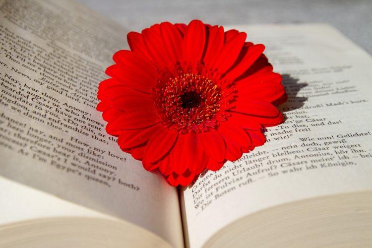 Trabaja como filólogo y enamórate de las lenguas y la literatura