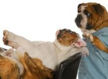 curso gratis de psicología canina