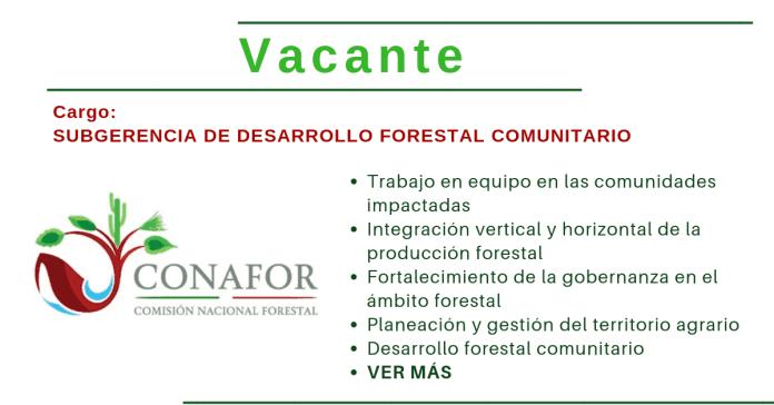 Vacantes empleo área forestal