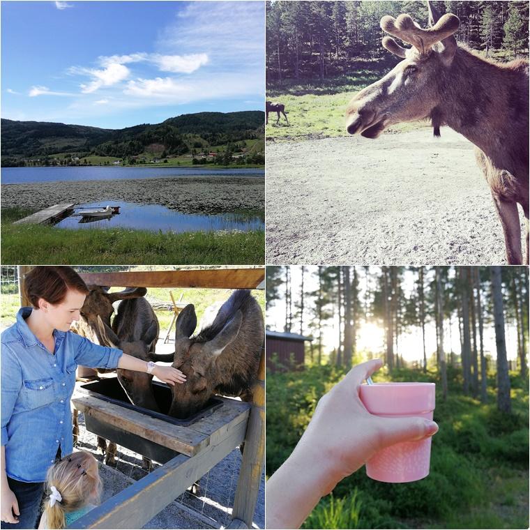 rondreis zuid noorwegen 10 - Family Travel | 5x bijzondere vakantiebestemmingen met kinderen