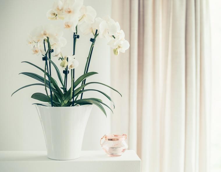 orchidee verzorgingstips 3 - Home | Orchidee verzorgingstips